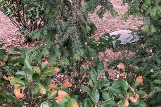 Gastank im Garten hinter einer Hecke versteckt